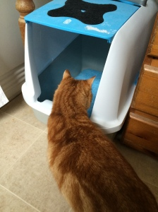The frugal pets review tigerino cat litter from Zooplus UK at Cottage Retreatist